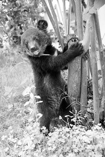 还会时不时发现野生动物的身影