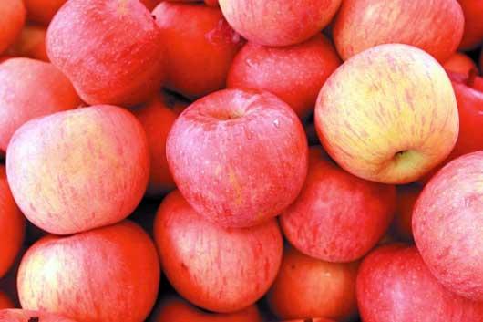 苹果发生小叶是什么原因?怎样防治?