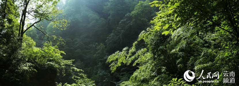 林地面积40100.5亩