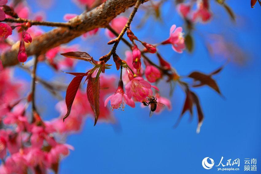 三瓣枫叶编织步骤图解