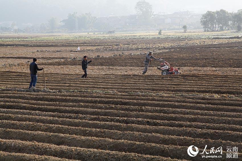 云南省德宏傣族景颇族自治州梁河县曩宋阿昌族乡的村民正在整地理墒图片