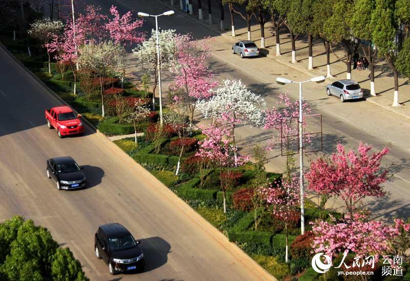 樱花树psd平面图素材
