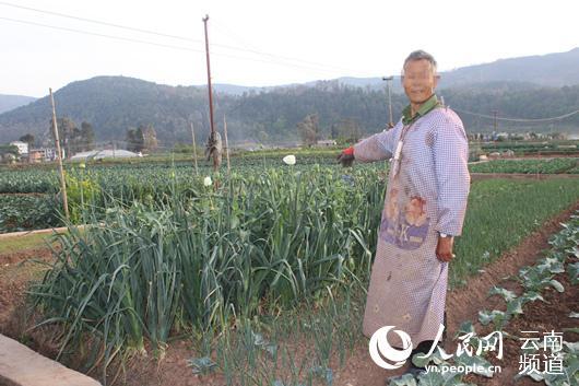 当事人在己个男地里种上了罂粟 缓急方供图
