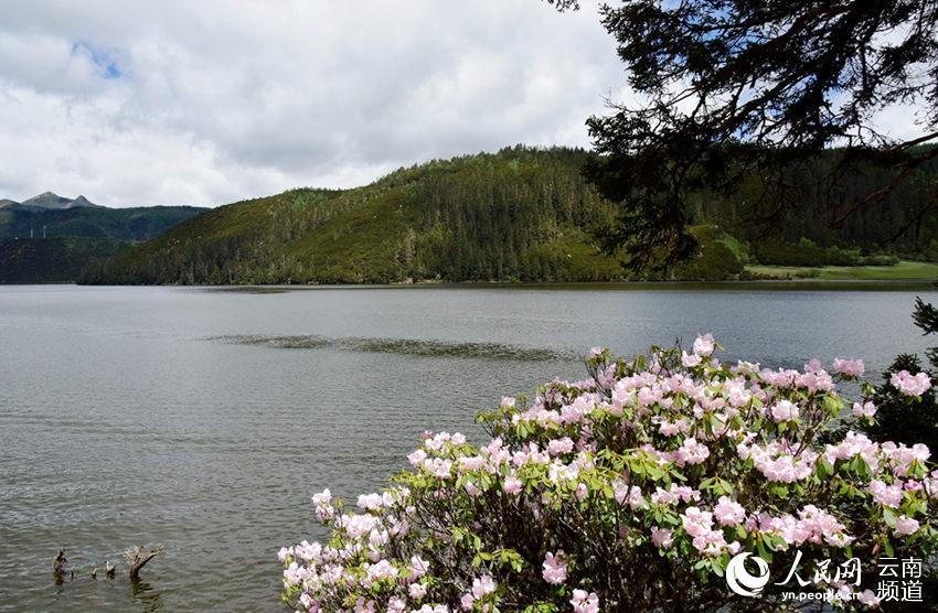 香格里拉普达措公园 原始生态环境美如画