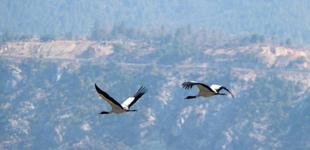 香格里拉:鹤舞高原