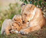 动物王国母爱洋溢瞬间
