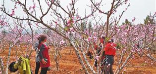 芒市举办桃园乡村文化旅游音乐节