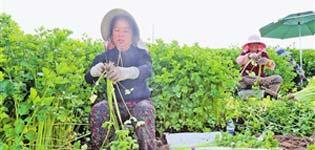通海加快农产品出口基地建设