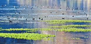 洱源:湿地美景风光怡人