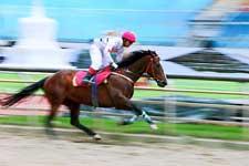 云南香格里拉:端午赛马节激情开幕