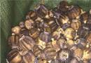 腾冲查获罂粟壳1.51吨