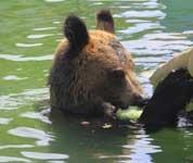 动物园花样降温 动物另类避暑