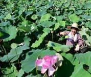 肥西:生态农业助力乡村振兴