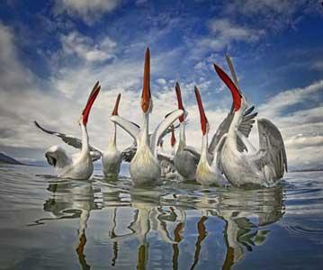 国际鸟类摄影师大赛作品展出