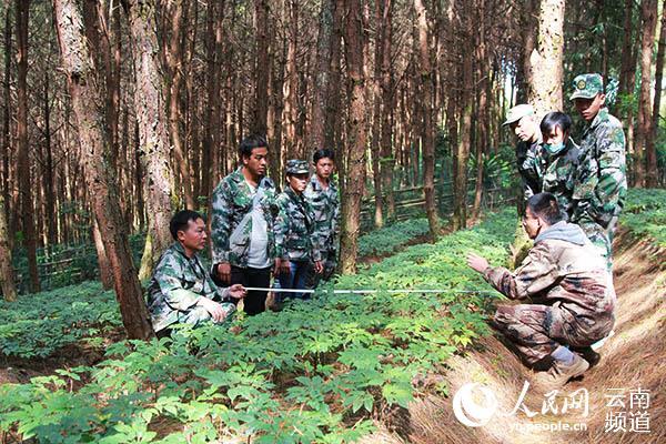 """""""院士专家指导班""""学员正在学习林下三七种植技术"""
