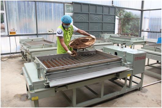 雨林古树茶:产业精准扶贫扶贫更