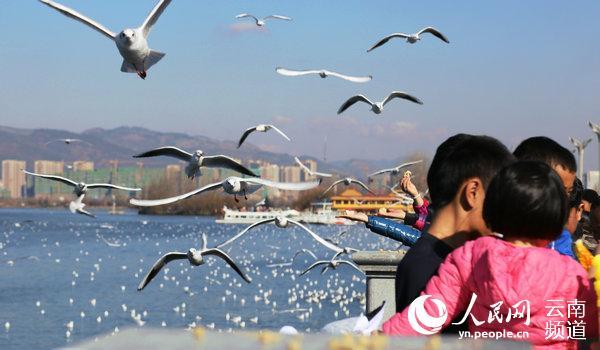 云南九大高原湖泊水质总体保持稳