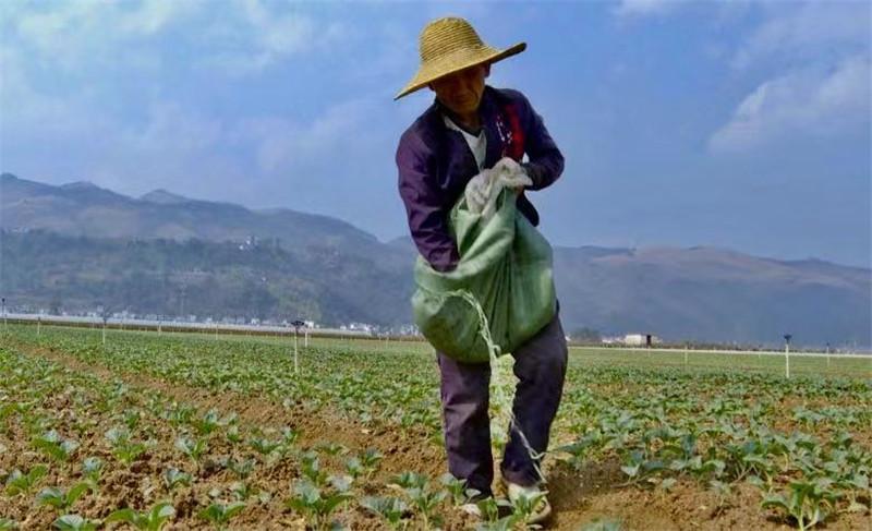 弥勒:疫情防控抓在手春耕生产不松手